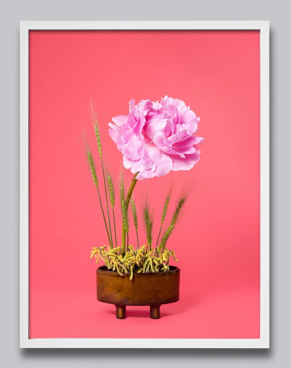 The work Ann Shelton has generously contributed to *When The Dust Settles*:  Ann Shelton *The Congress Woman, Peony (Paeonia sp.)* 2020 pigment print 1120 x 840 mm print size, 1170 x 890 mm framed edition 2 of 6, plus 2 artist copies Courtesy of the artist and Two Rooms, Tāmaki Makaurau Auckland